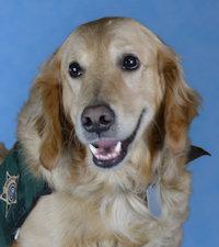 Deputy Boulder